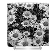 Daisy Cluster Vermont Flowers In Black And White Shower Curtain