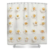 Daisy Collection Shower Curtain
