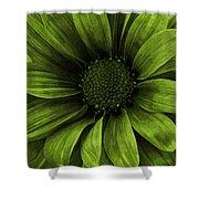 Daisy Daisy Avacado Shower Curtain