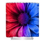 Daisy Daisy Red To Blue Shower Curtain