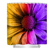 Daisy Daisy Yellow To Purple Shower Curtain