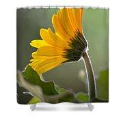 Daisy Derriere Shower Curtain