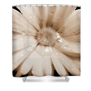 Daisy Dream Raindrops Sepia Shower Curtain