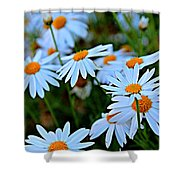 Daisy Fireworks Shower Curtain