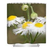 Daisy Fleabane Shower Curtain