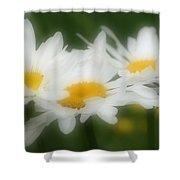 Daisy Flower Trio Shower Curtain