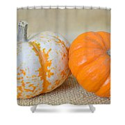 Daisy Gourd And Pumpkin Shower Curtain