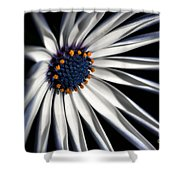 Daisy Heart Shower Curtain