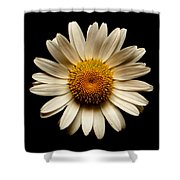 Daisy On Black Square Shower Curtain