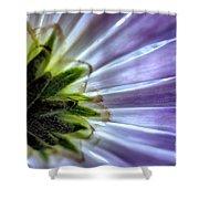 Daisy Petals Abstract Macro Shower Curtain