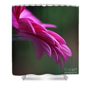 Daisy Petals Shower Curtain