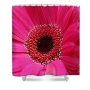 Daisy Pink Shower Curtain