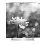 Daisy Rain Shower Curtain