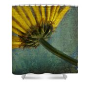 Daisy Reach Shower Curtain