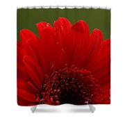 Daisy Red Shower Curtain