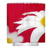 Daisy Reflecting On Red V2 Shower Curtain