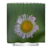 Daisy Weed Series Photo A Shower Curtain