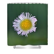 Daisy Weed Series Photo B Shower Curtain