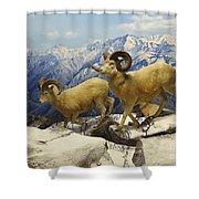 Dall Sheep Diorama Shower Curtain