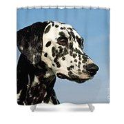 Dalmatian Dog Shower Curtain