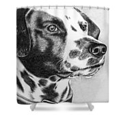 Dalmatian Portrait Shower Curtain