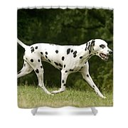 Dalmatian Running Shower Curtain