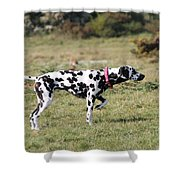 Dalmation Pretending To Be A Pointer Shower Curtain