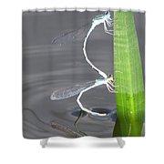Damselflies Mating Shower Curtain