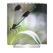 Damselfly On Little River  Shower Curtain