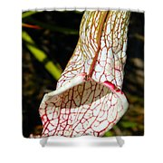 Dana's Delight Carnivorous Pitcher Plant Shower Curtain