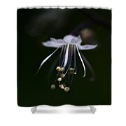 Dance In The Forest Shower Curtain