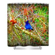 Dance Of Blue Jay Shower Curtain