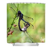 Dance Of The Dragonfliesd Shower Curtain