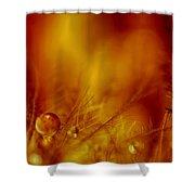 Dancing At The Gates Of Hell Shower Curtain