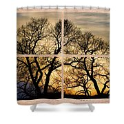 Dancing Forest Trees Picture Window Frame Photo Art View Shower Curtain