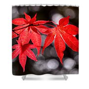Dancing Japanese Maple Shower Curtain by Rona Black