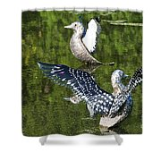 Dancing Loons Shower Curtain