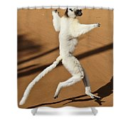 Dancing Sifaka 2 Shower Curtain