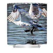 Dancing Swan Shower Curtain