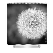 Dandelion 2 In Black And White Shower Curtain