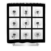 Dandelion 3 Shower Curtain