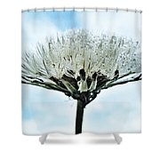 Dandelion After Rain Shower Curtain