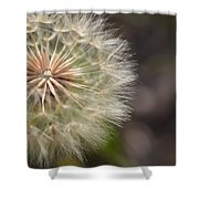 Dandelion Art - So It Begins - By Sharon Cummings Shower Curtain