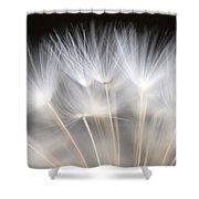 Dandelion Backlit Close Up Shower Curtain