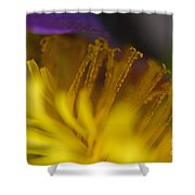 Dandelion Bloom Macro Shower Curtain
