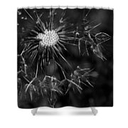 Dandelion Burst Shower Curtain