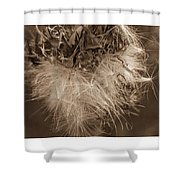 Dandelion Burst Sepia Shower Curtain