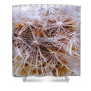 Dandelion Closeup Shower Curtain