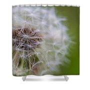 ...dandelion Shower Curtain
