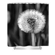Dandelion Fluff Black And White Shower Curtain